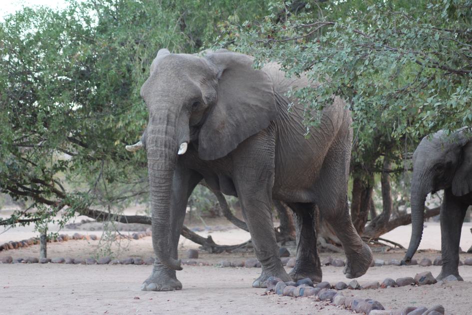 Elephant on camping site